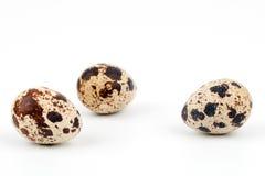 Three quail eggs Stock Image