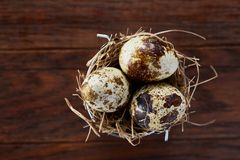 Three quail eggs in hay nest over dark wooden background, close up, selective focus. Three fresh raw spotted quail eggs in hay nest over dark wooden background royalty free stock photo