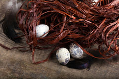 Three quail eggs lying beside ruined nest Royalty Free Stock Photos