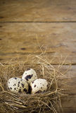 Three quail eggs in the nest. On wooden background Royalty Free Stock Images