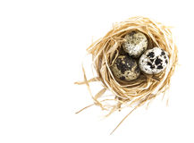 Three quail eggs in nest Stock Photo