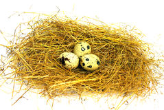 Three quail eggs in a nest on a white background Royalty Free Stock Photography