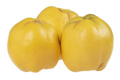 Three quince Royalty Free Stock Photography