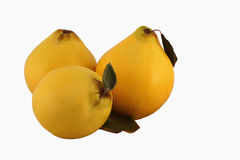 Three Quince on the White Background Royalty Free Stock Photo