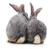 Three rabbit back. On a white background royalty free stock photos