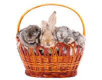 Three rabbit in a basket Stock Photo