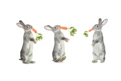 Three rabbit Royalty Free Stock Photography