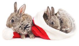 Three rabbits in a Christmas hat. Royalty Free Stock Photos