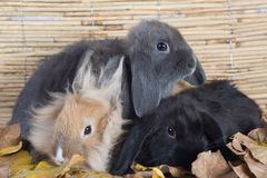Three rabbits with leafs royalty free stock images