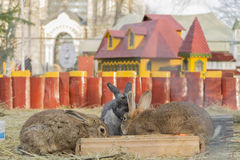 Three rabbits in the their castle Royalty Free Stock Photos