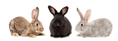 Three rabbits together. Isolated on white background royalty free stock images
