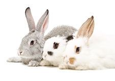 Three rabbits Stock Photos