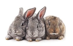Three rabbits. Three rabbits on a white background Stock Image