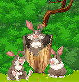 Three rabbits in the woods Royalty Free Stock Images