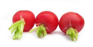 Three radishes Stock Photography