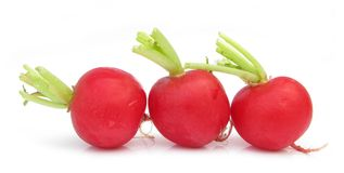 Three radishes. The radish (Raphanus sativus) is an edible root vegetable of the Brassicaceae family that was domesticated in Europe in pre-Roman times. They are Stock Photo