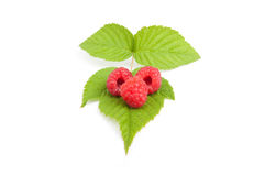 Three raspberries on green leaf, white background. Three raspberry on green leaf, white background, isolated Royalty Free Stock Image