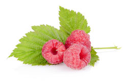Three raspberries with leaf isolated on white. Background Stock Photos