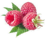 Three raspberries with leaves Royalty Free Stock Photography