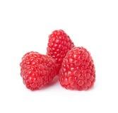 Three Raspberry Royalty Free Stock Image