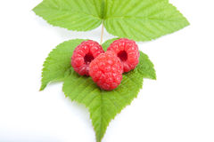 Three raspberry fruits on green leaf. Closeup of three raspberry fruits on green leaf Royalty Free Stock Photography