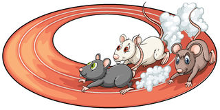 Three rats racing Royalty Free Stock Images