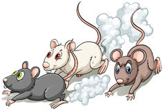 Three rats. Racing on a white background Stock Photo