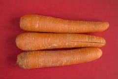 Three raw carrots Royalty Free Stock Photo