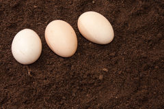 Three raw eggs on the soil Royalty Free Stock Images