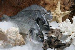 Three raw fish Royalty Free Stock Photo