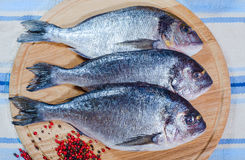 Three raw fishes on wooden plate. With pepper Stock Image