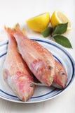Three raw goatfishes Royalty Free Stock Image