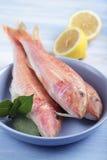 Three raw goatfishes Stock Photos