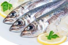 Three raw mackerel. Royalty Free Stock Photography