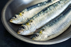 Three Raw Sardines in a Metal Bowl Stock Photos