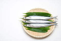 Three raw sauries Stock Images