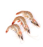 Three raw shrimps. Stock Image