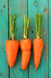 Three raw whole organic orange carrots with greens on wooden tur Royalty Free Stock Images