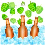 Three realistic brown bottle of beer stand in ice cubes among flying depth of field hop cones on white. Background Royalty Free Stock Photography