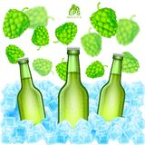 Three realistic green bottle of beer stand in ice cubes among flying depth of field hop cones on white. Background Stock Image