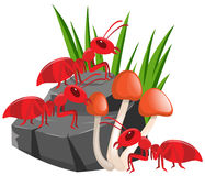 Three red ants on the rock. Illustration royalty free illustration