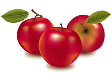 Three red apples. Stock Photo