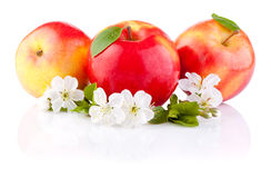 Three Red Apples with Leaf and Flowers isolated Royalty Free Stock Photography