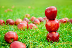 Three red apples stacked in grass field Stock Photo