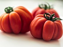Three red beefsteak tomatoes. Fresh ribbed tomato with sepal. Ripe ribbed heirloom tomato beefsteak-type or slicer with sepal stock images