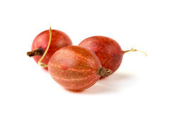 Three red berries of a gooseberry Stock Image