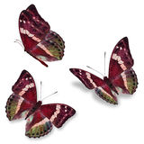 Three red butterfly royalty free stock image