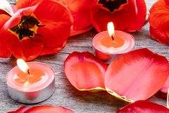 Three red candles are burning near the tulips and fallen petals. Red burning candle stock images