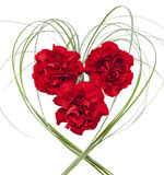 Three red carnation on white isolated background Stock Photo