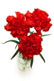 Three Red Carnations Stock Images
